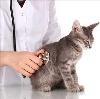 Ветеринарные клиники в Назрани